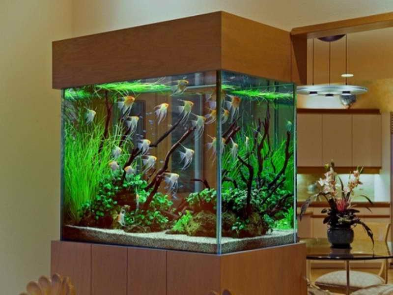 marine aquarium design ideas » Design and Ideas