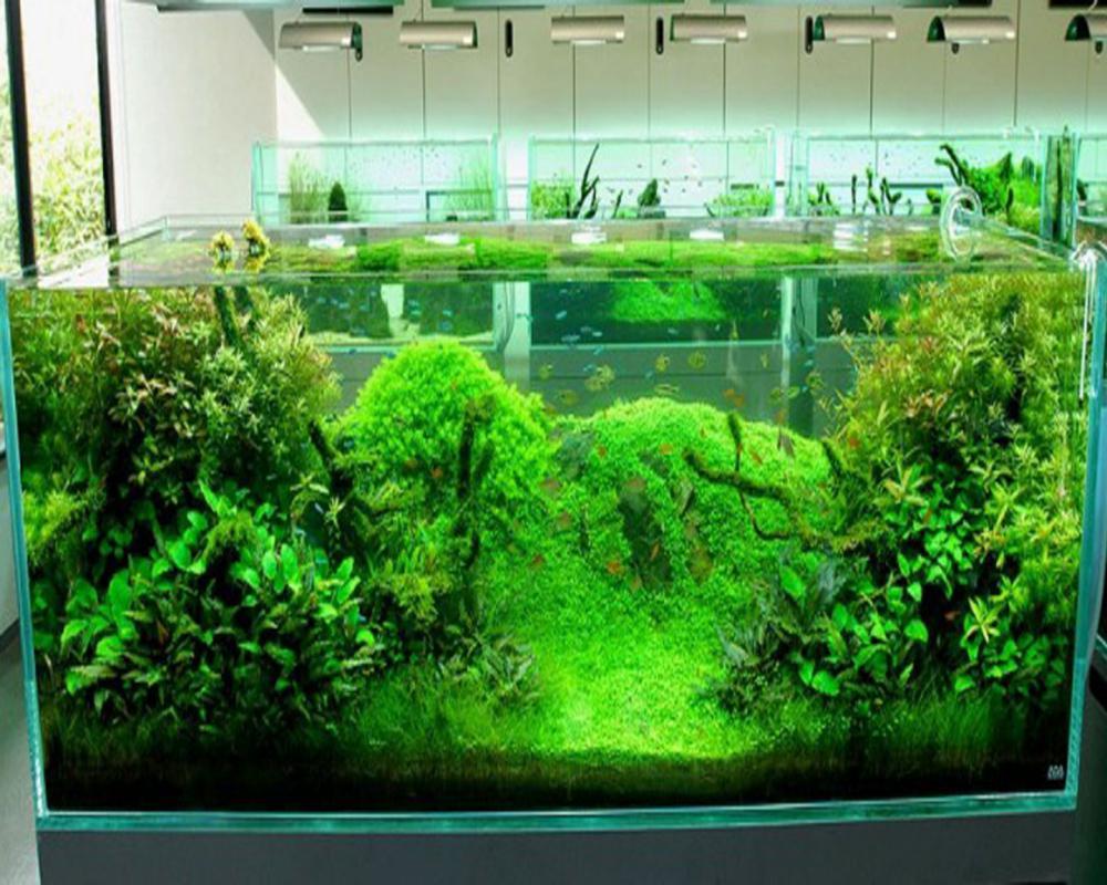 design aquarium design and ideas. Black Bedroom Furniture Sets. Home Design Ideas